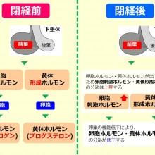 更年期におけるホルモンの変化_0204