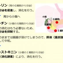 消化管ホルモン_20150617