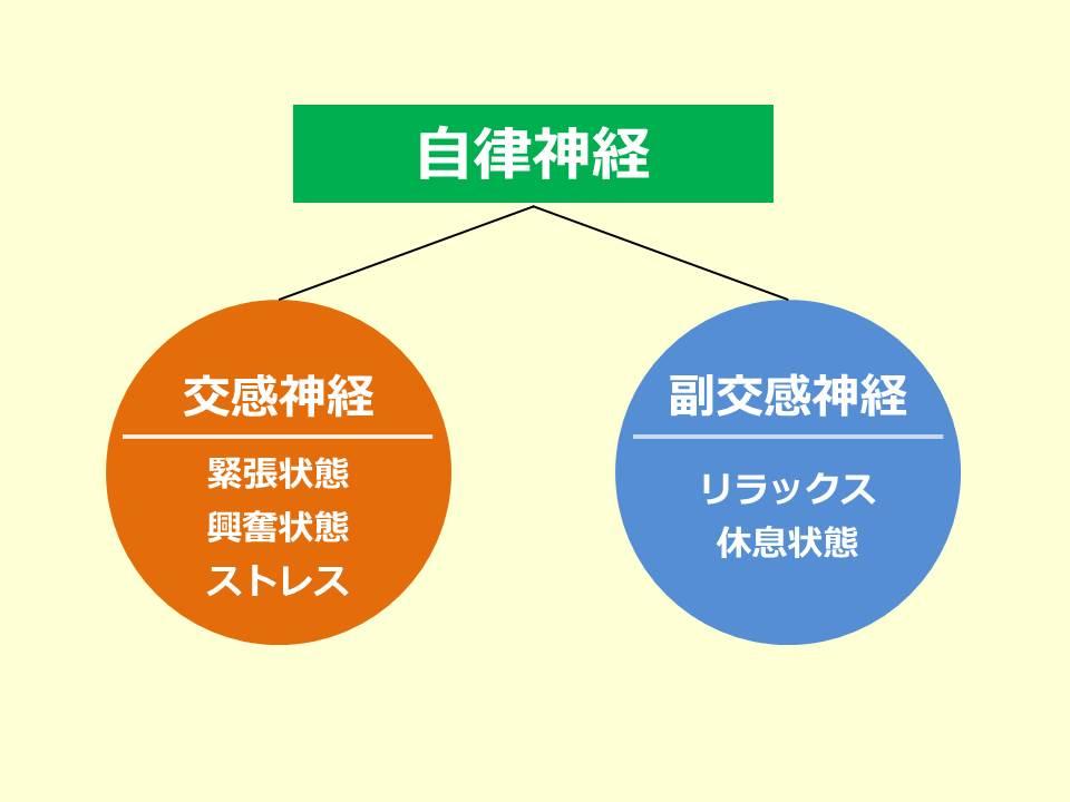 交感神経と副交感神経_01_150901