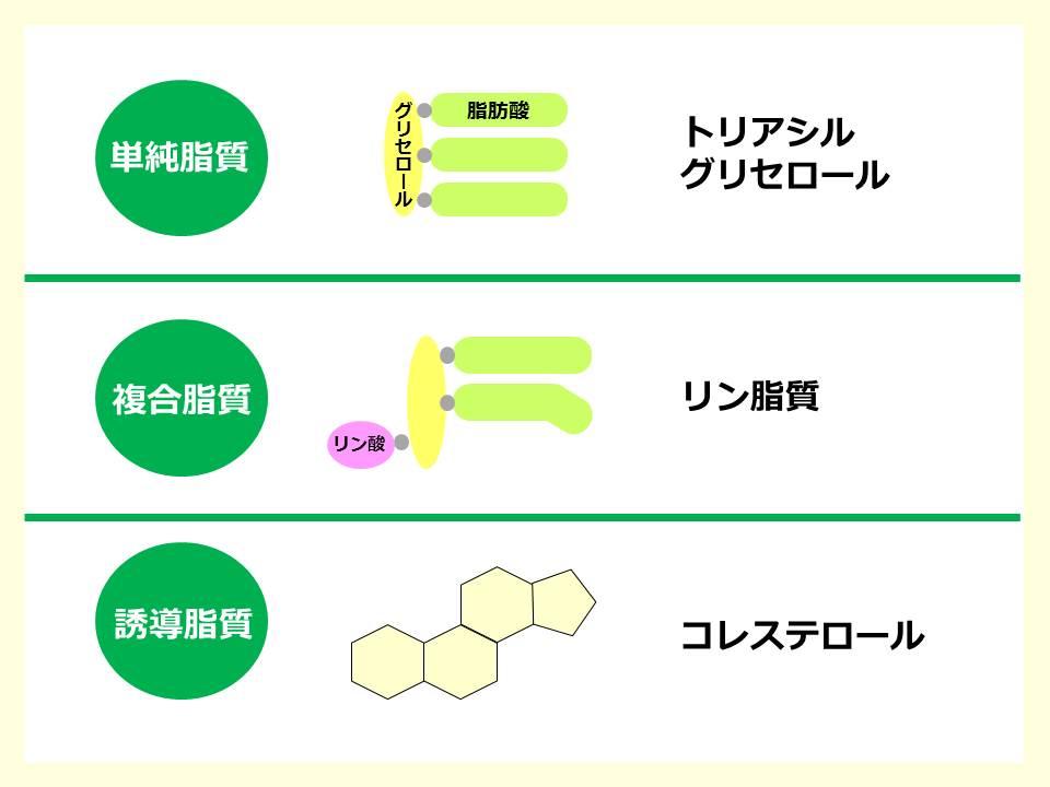 基礎】脂質の化学 – SGSブログ