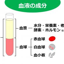 血液の成分1_20160803