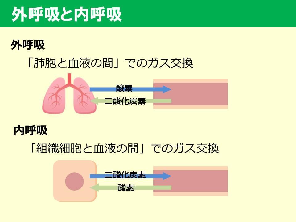人体】呼吸(外呼吸・内呼吸) – SGSブログ